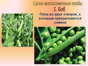 Бочкова И.А. Плод из двух створок, к которым прикрепляются семена Бочкова И.А.