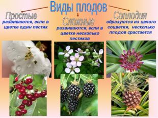 Бочкова И.А. развиваются, если в цветке один пестик развиваются, если в цветк