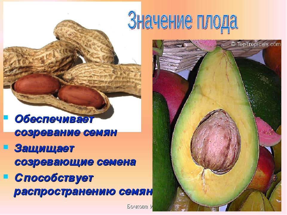 Бочкова И.А. Обеспечивает созревание семян Защищает созревающие семена Способ...