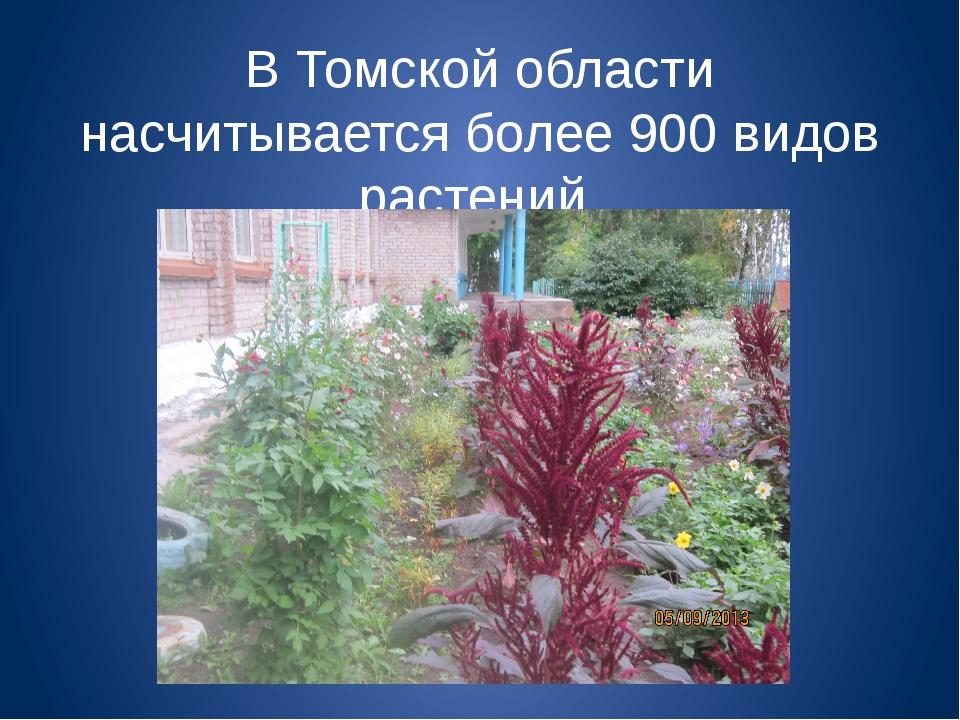 В Томской области насчитывается более 900 видов растений.