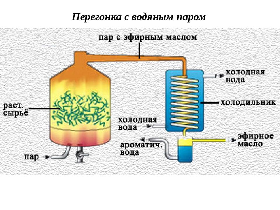 Как сделать масло пихтовое в домашних условиях