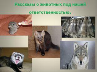 Рассказы о животных под нашей ответственностью.
