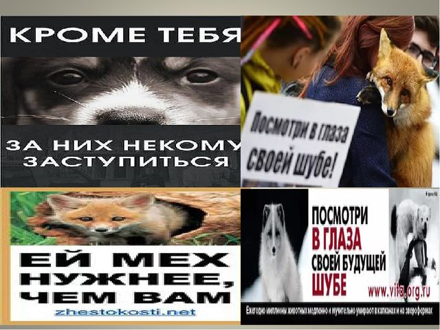Лозунг: Давайте любить и беречь животных!