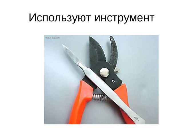 Используют инструмент