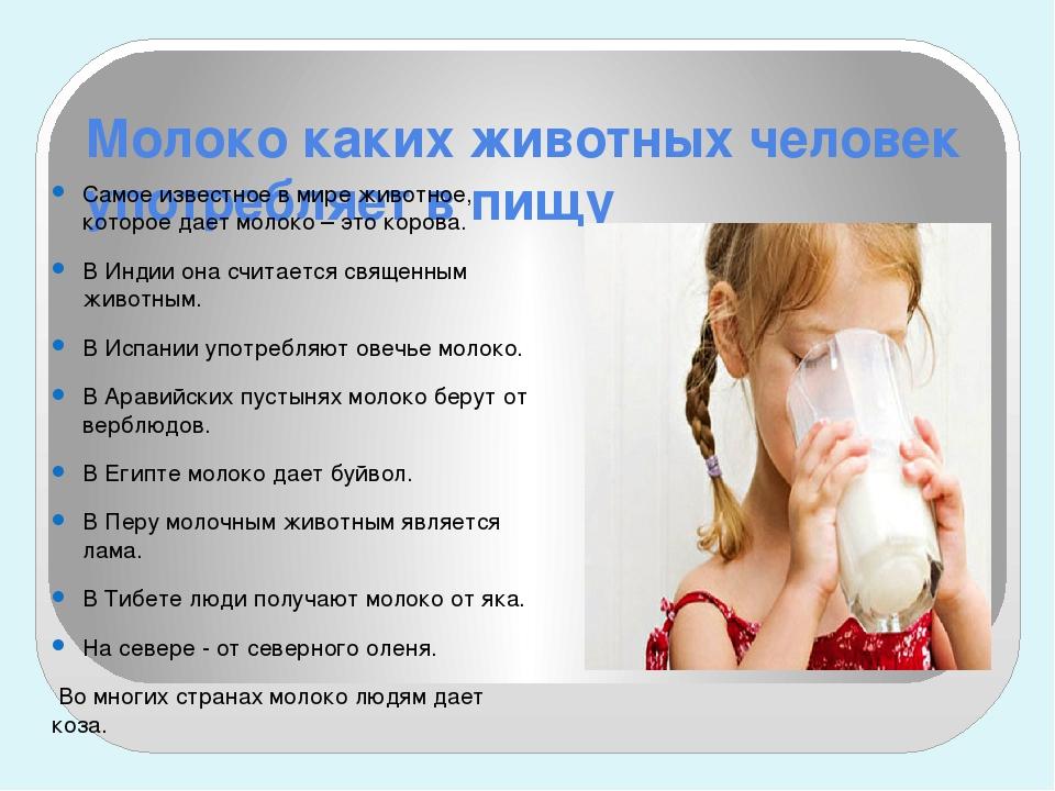 Молоко каких животных человек употребляет в пищу Самое известное в мире живот...