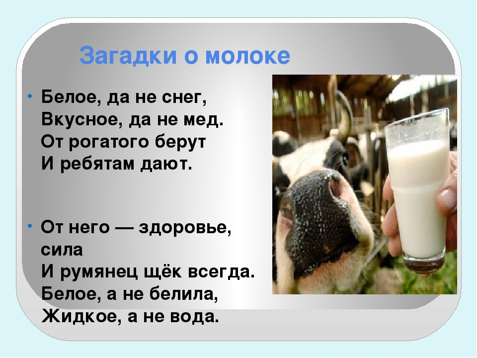 Загадки о молоке Белое, да не снег, Вкусное, да не мед. От рогатого берут И р...
