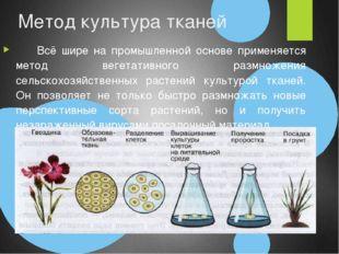 Метод культура тканей Всё шире на промышленной основе применяется метод веге