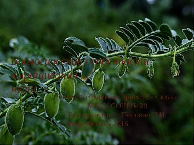 Биологические особенности выращивания нута. Автор: Сейдаметов Эрнест, 5-А кл...