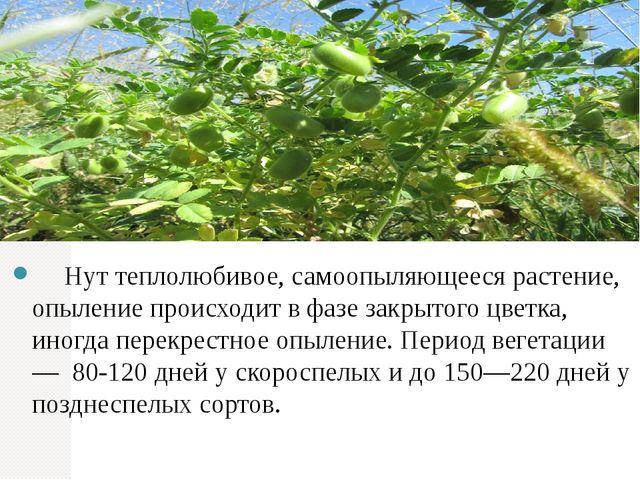 Нут теплолюбивое, самоопыляющееся растение, опыление происходит в фазе закры...