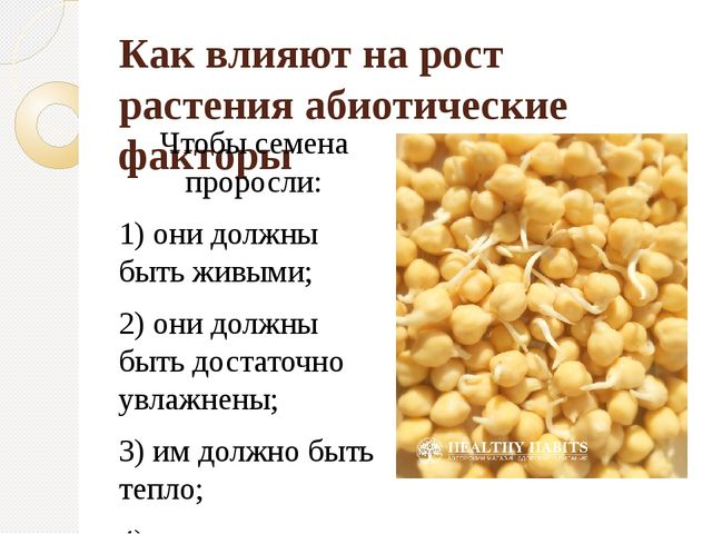 Как влияют на рост растения абиотические факторы Чтобы семена проросли: 1) он...