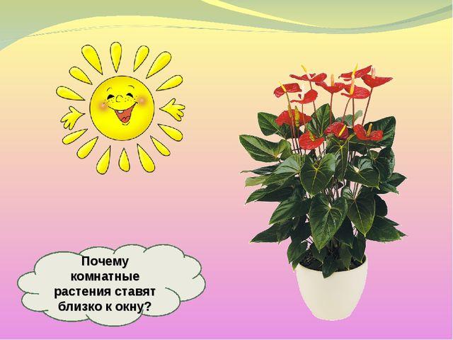 Почему комнатные растения ставят близко к окну?