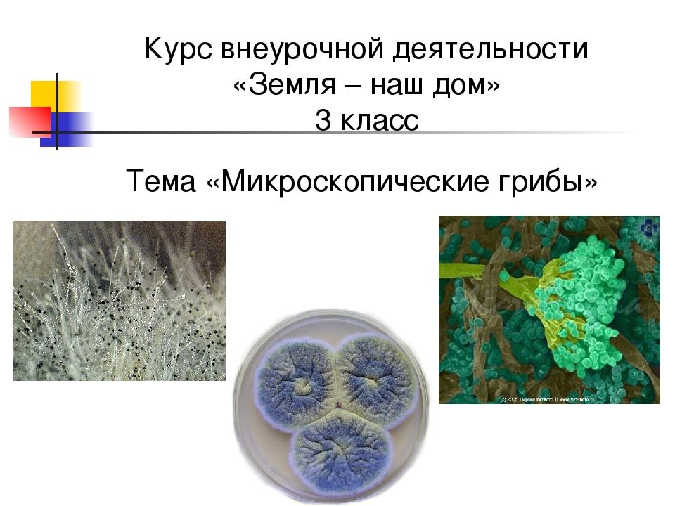 Тема «Микроскопические грибы» Курс внеурочной деятельности «Земля – наш дом»...