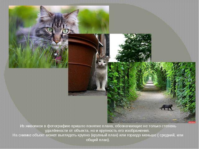 Из живописи в фотографию пришло понятие плана, обозначающие не только степень...
