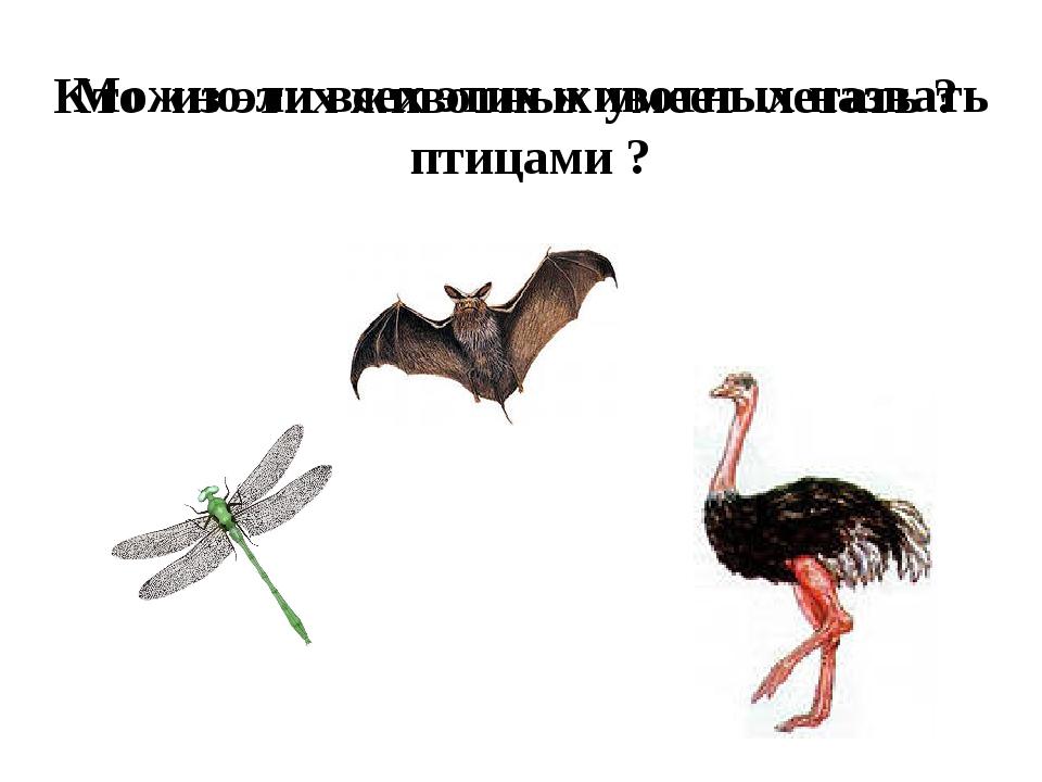 Кто из этих животных умеет летать ? Можно ли всех этих животных назвать птица...