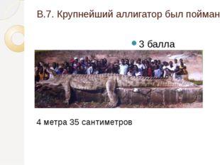 В.7. Крупнейший аллигатор был пойман во Флориде (США), какова его длина? 3 ба