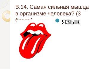 В.14. Самая сильная мышца в организме человека? (3 балла) язык