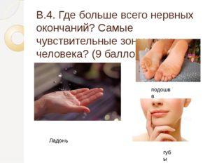 В.4. Где больше всего нервных окончаний? Самые чувствительные зоны кожи челов