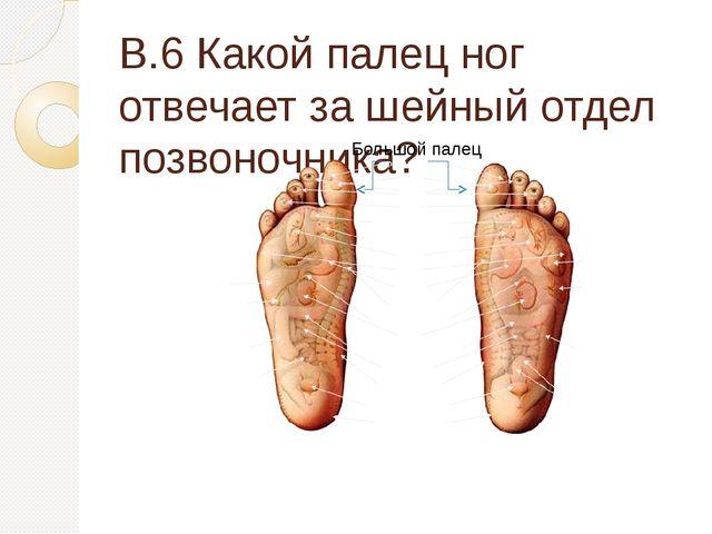 В.6 Какой палец ног отвечает за шейный отдел позвоночника? Большой палец