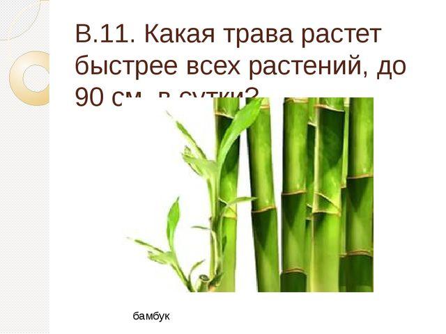 В.11. Какая трава растет быстрее всех растений, до 90 см. в сутки? бамбук