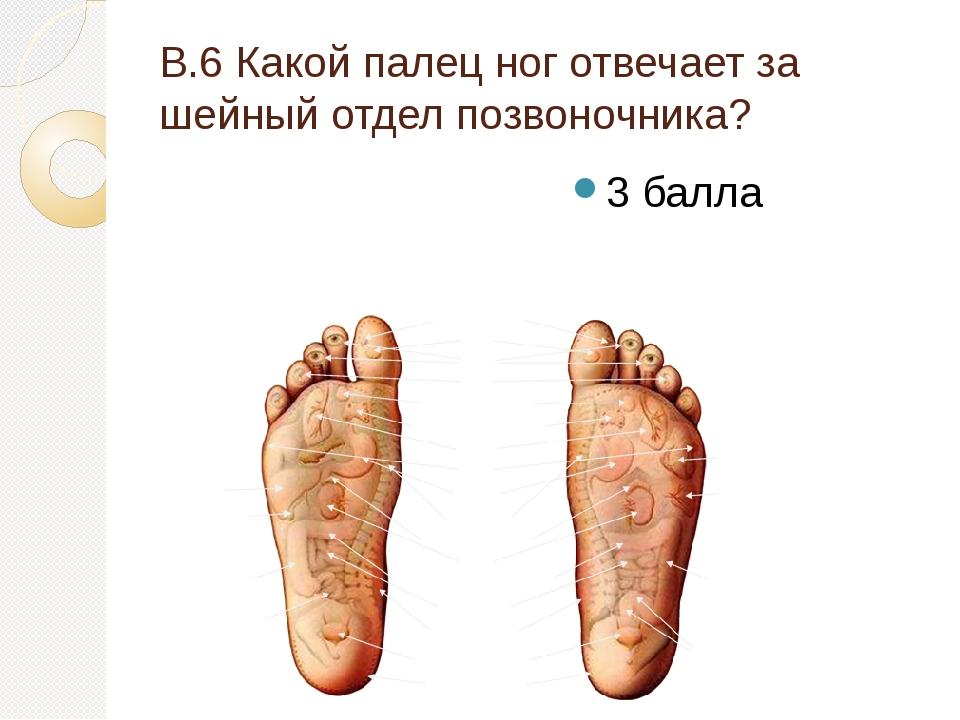 В.6 Какой палец ног отвечает за шейный отдел позвоночника? 3 балла
