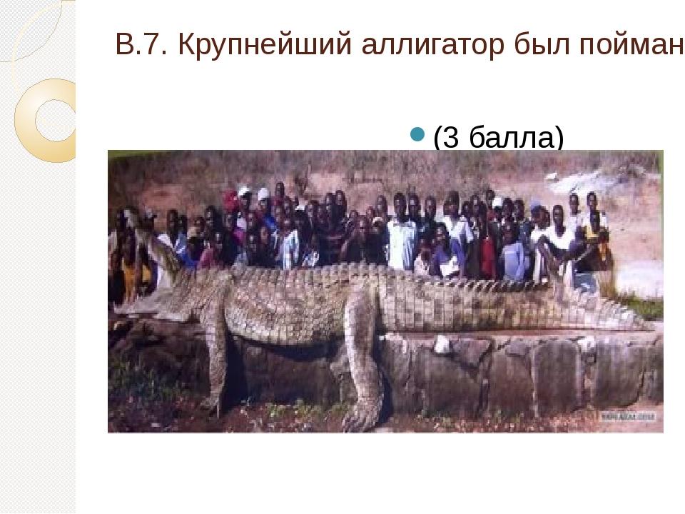 В.7. Крупнейший аллигатор был пойман во Флориде (США), какова его длина? (3 б...