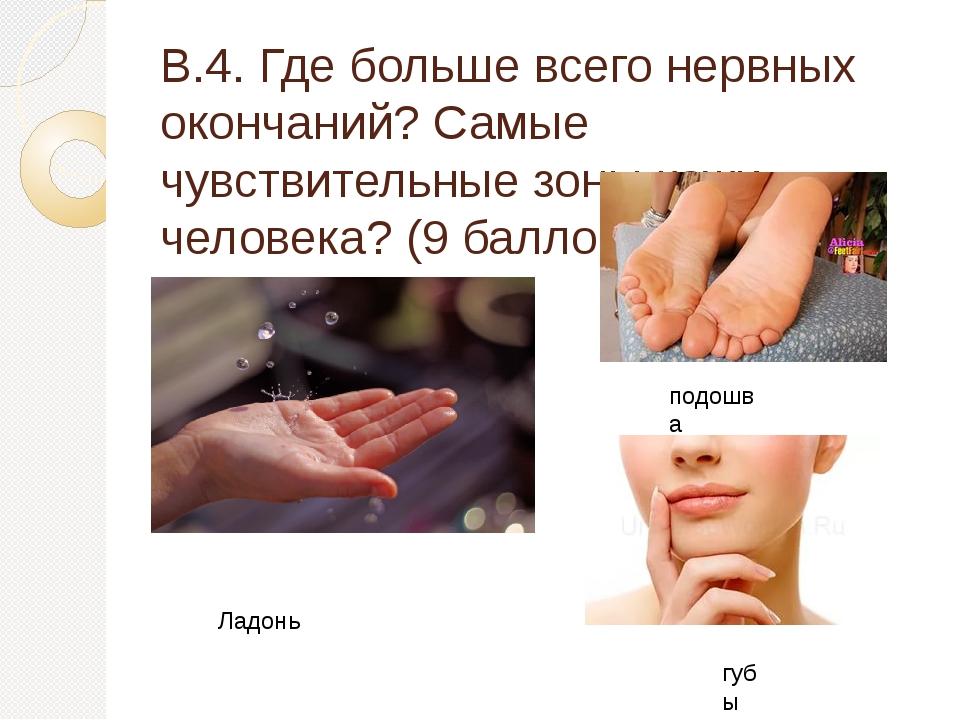 В.4. Где больше всего нервных окончаний? Самые чувствительные зоны кожи челов...
