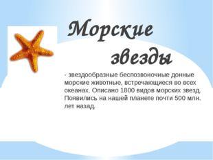 Морские звезды - звездообразные беспозвоночные донные морские животные, встре
