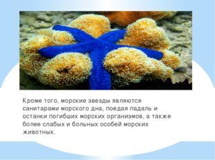 Кроме того, морские звезды являются санитарами морского дна, поедая падаль и