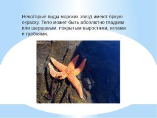 Некоторые виды морских звезд имеют яркую окраску. Тело может быть абсолютно г