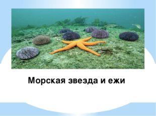 Морская звезда и ежи