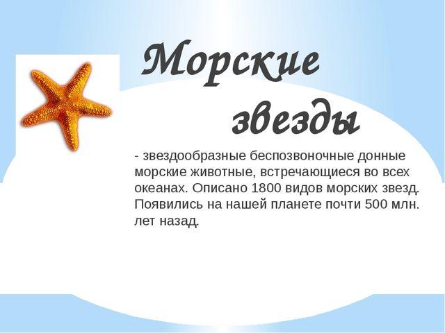 Морские звезды - звездообразные беспозвоночные донные морские животные, встре...