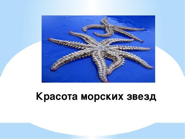 Красота морских звезд