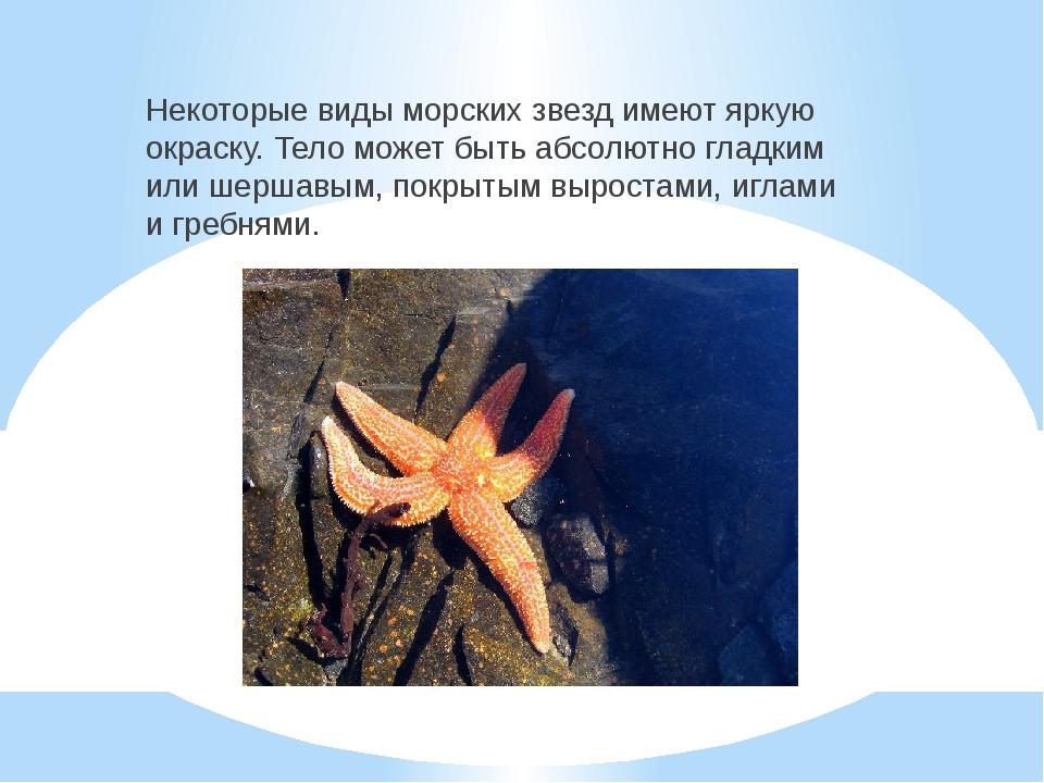 Некоторые виды морских звезд имеют яркую окраску. Тело может быть абсолютно г...