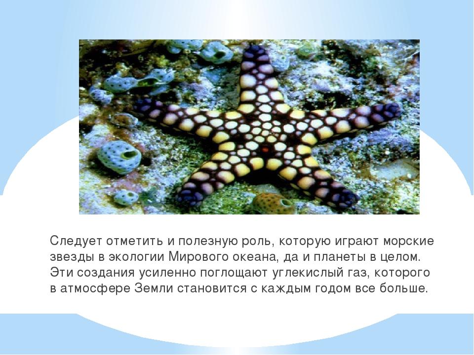 Следует отметить и полезную роль, которую играют морские звезды в экологии Ми...