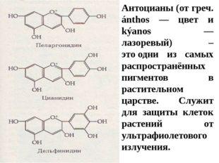 Антоцианы (от греч. ánthos — цвет и kýаnos — лазоревый) – этоодни из самых р