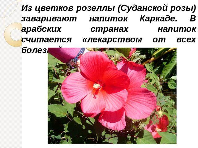 Из цветков розеллы (Суданской розы) заваривают напиток Каркаде. В арабских ст...