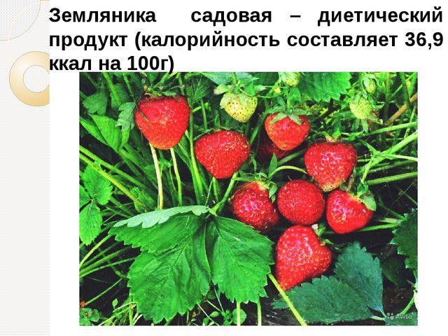 Земляника садовая – диетический продукт (калорийность составляет 36,9 ккал на...