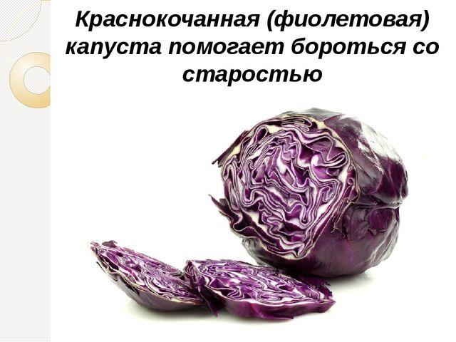 Краснокочанная (фиолетовая) капуста помогает бороться со старостью