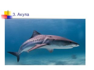 3. Акула
