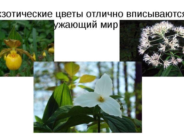 Экзотические цветы отлично вписываются в окружающий мир парка