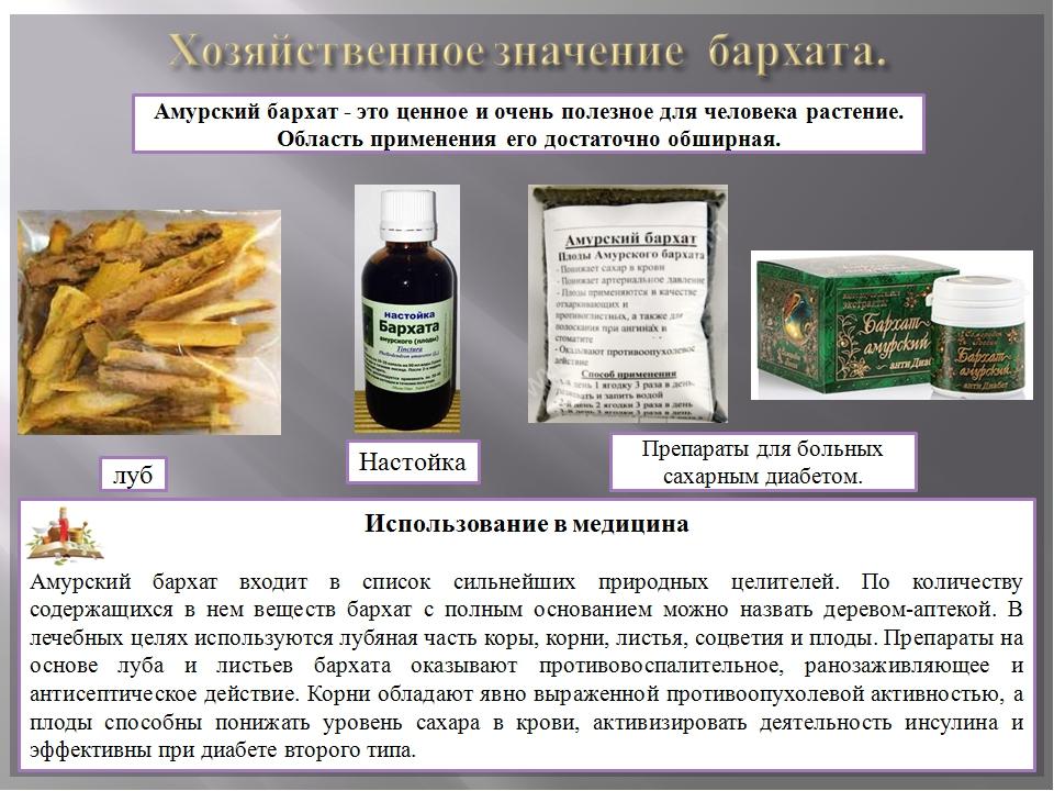 Плоды бархата амурского применение при импотенции