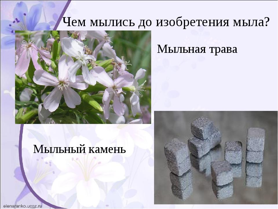 Чем мылись до изобретения мыла? Мыльная трава Мыльный камень