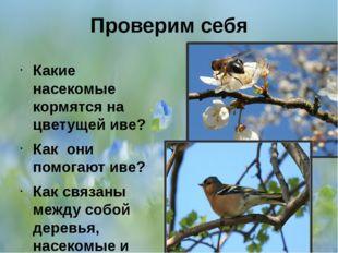 Проверим себя Какие насекомые кормятся на цветущей иве? Как они помогают иве?