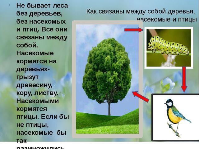 Как связаны между собой деревья, насекомые и птицы Не бывает леса без деревь...