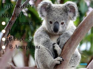 Где живет коала? В Африке В Азии В Европе В Австралии