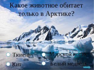 Какое животное обитает только в Арктике? Тюлень Кит Морской котик Белый медведь