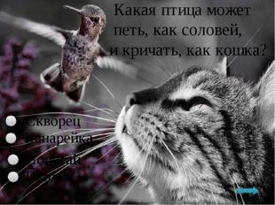 Какая птица может петь, как соловей, и кричать, как кошка? Скворец Иволга По