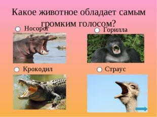 Какое животное обладает самым громким голосом? Крокодил Носорог Горилла Страус