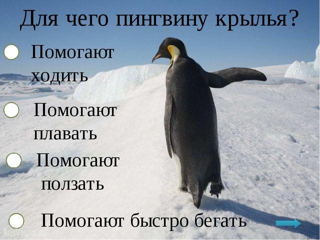 Для чего пингвину крылья? Помогают ходить Помогают плавать Помогают ползать П...