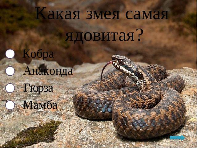 Какая змея самая ядовитая? Кобра Анаконда Гюрза Мамба